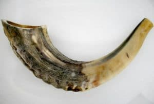 Small Ram's Horn Half Polished Shofar -Kosher